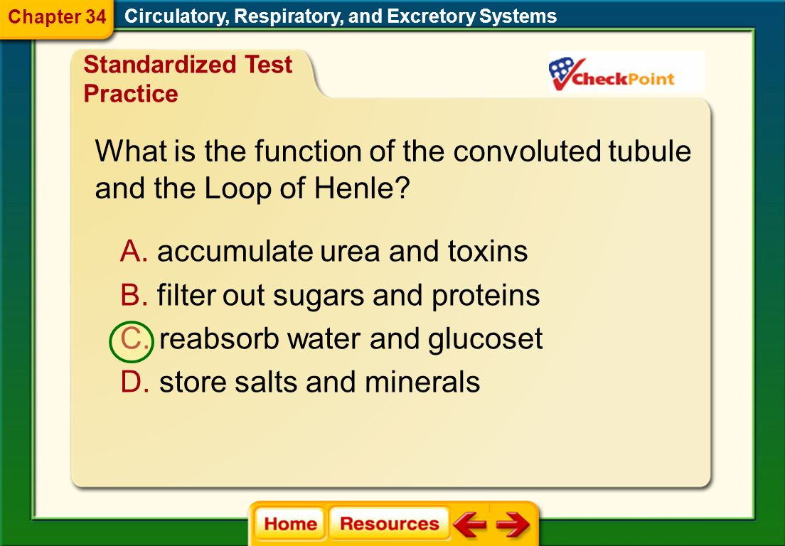 What is the function of the convoluted tubule and the Loop of Henle