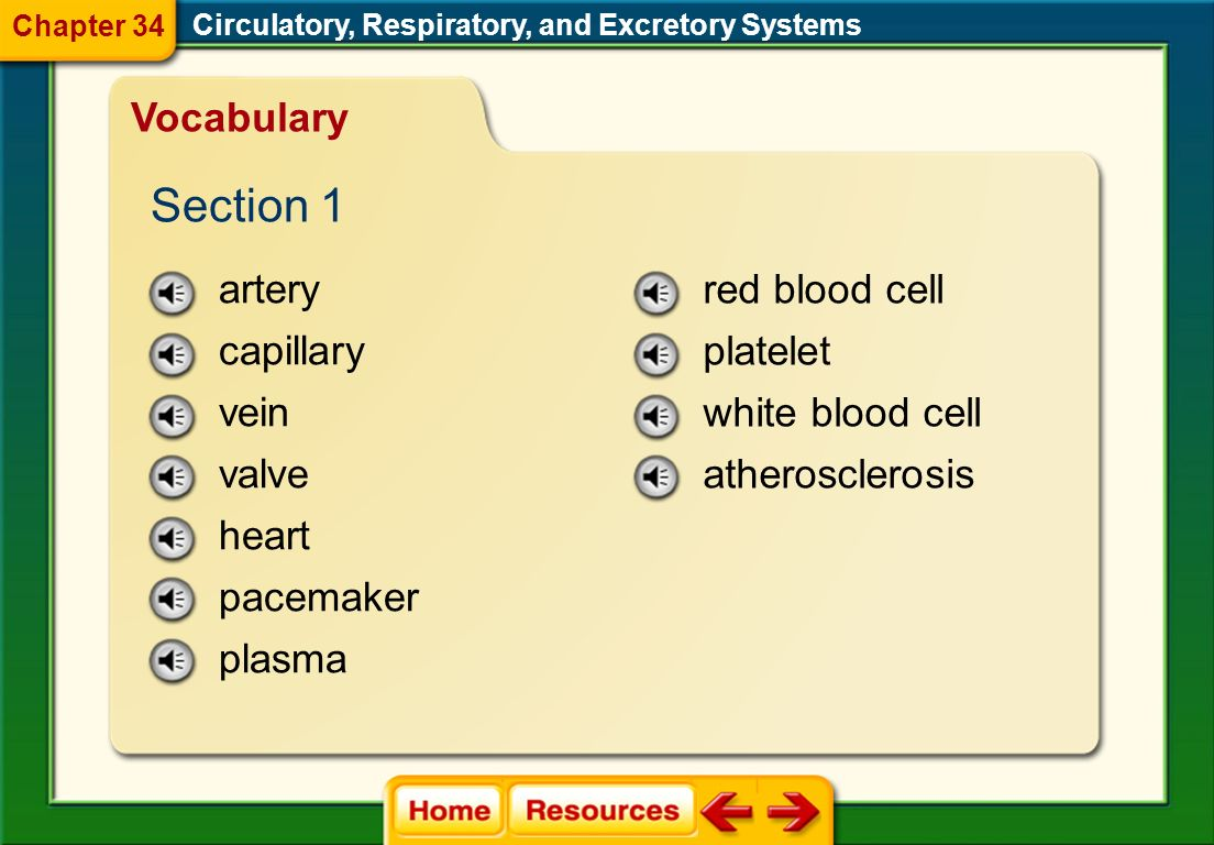 Section 1 Vocabulary artery capillary vein valve heart pacemaker