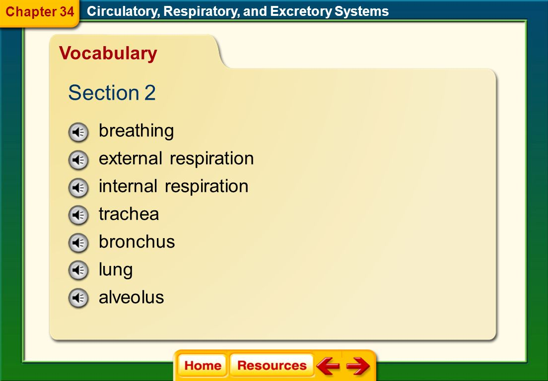 Section 2 Vocabulary breathing external respiration