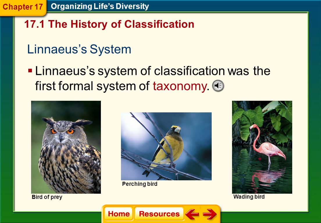 Chapter 17Organizing Life's Diversity. 17.1 The History of Classification. Linnaeus's System.