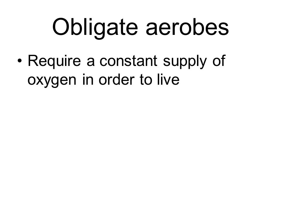 Obligate aerobes Require a constant supply of oxygen in order to live