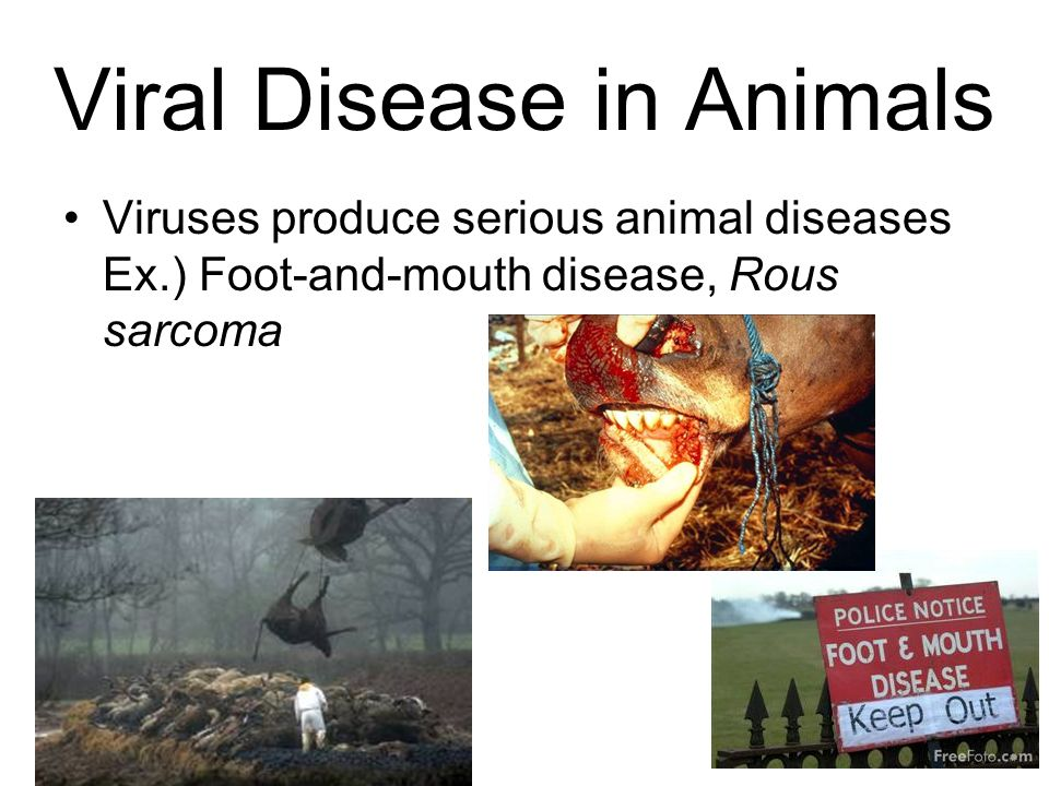 Viral Disease in Animals