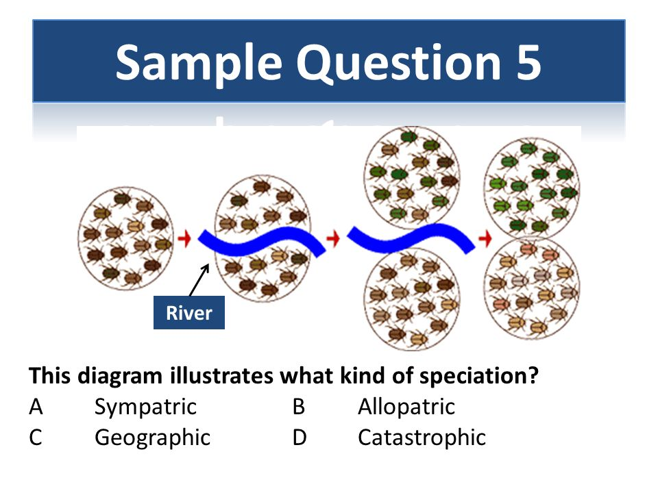 Sample Question 5 This diagram illustrates what kind of speciation