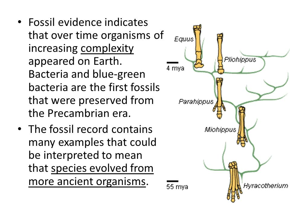 Fossil evidence indicates that over time organisms of increasing complexity appeared on Earth. Bacteria and blue-green bacteria are the first fossils that were preserved from the Precambrian era.