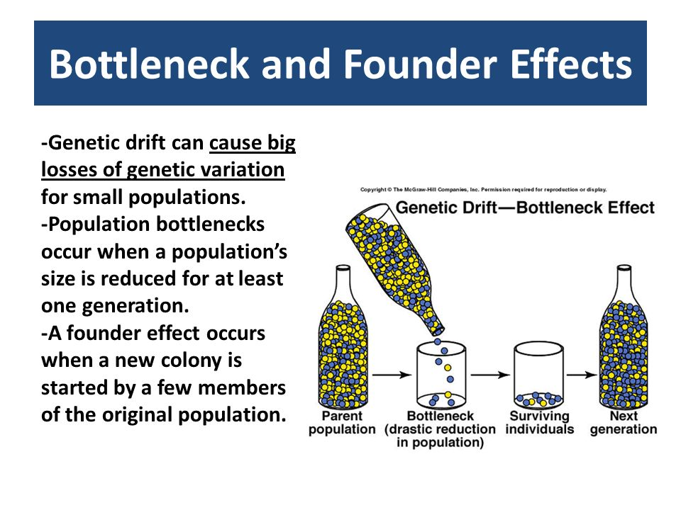 Bottleneck and Founder Effects