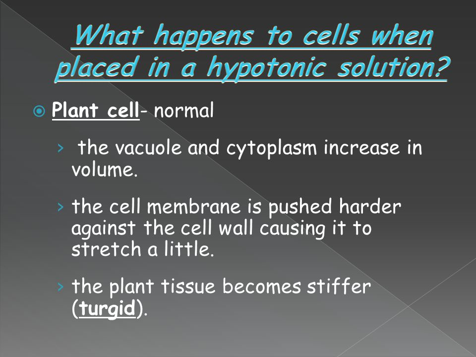 What happens to cells when placed in a hypotonic solution