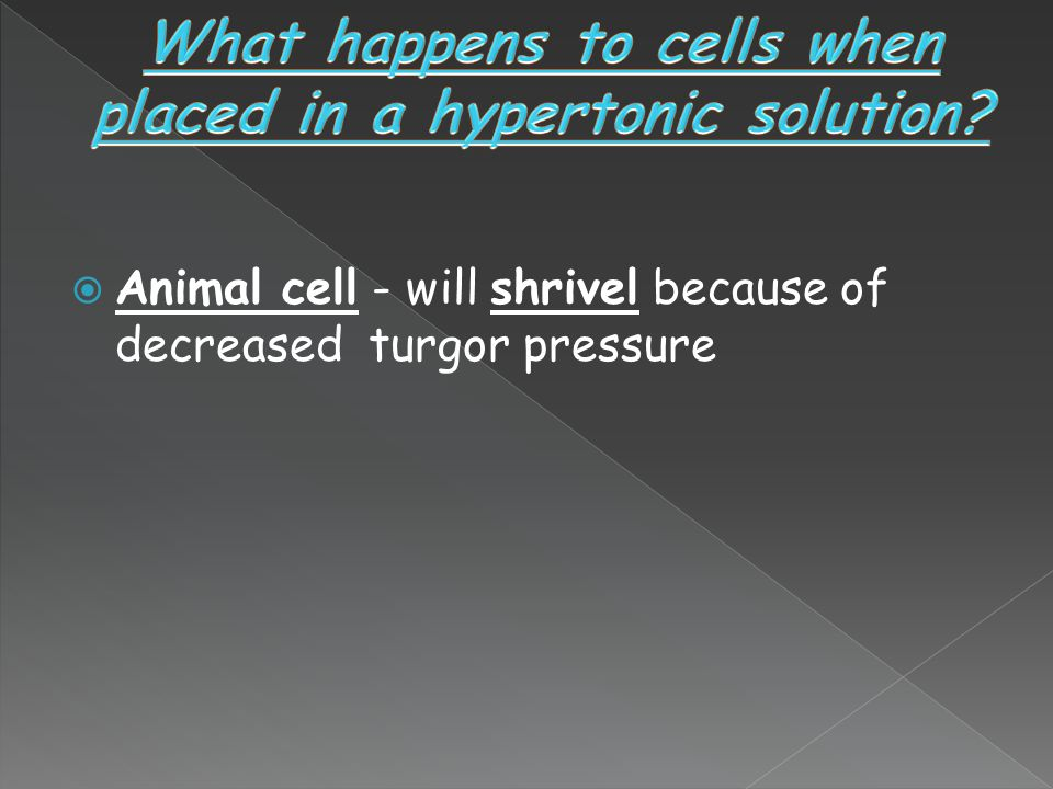 What happens to cells when placed in a hypertonic solution