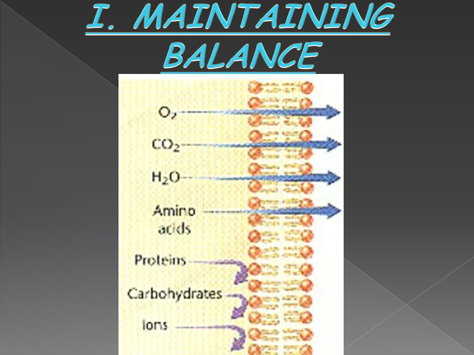 I. MAINTAINING BALANCE