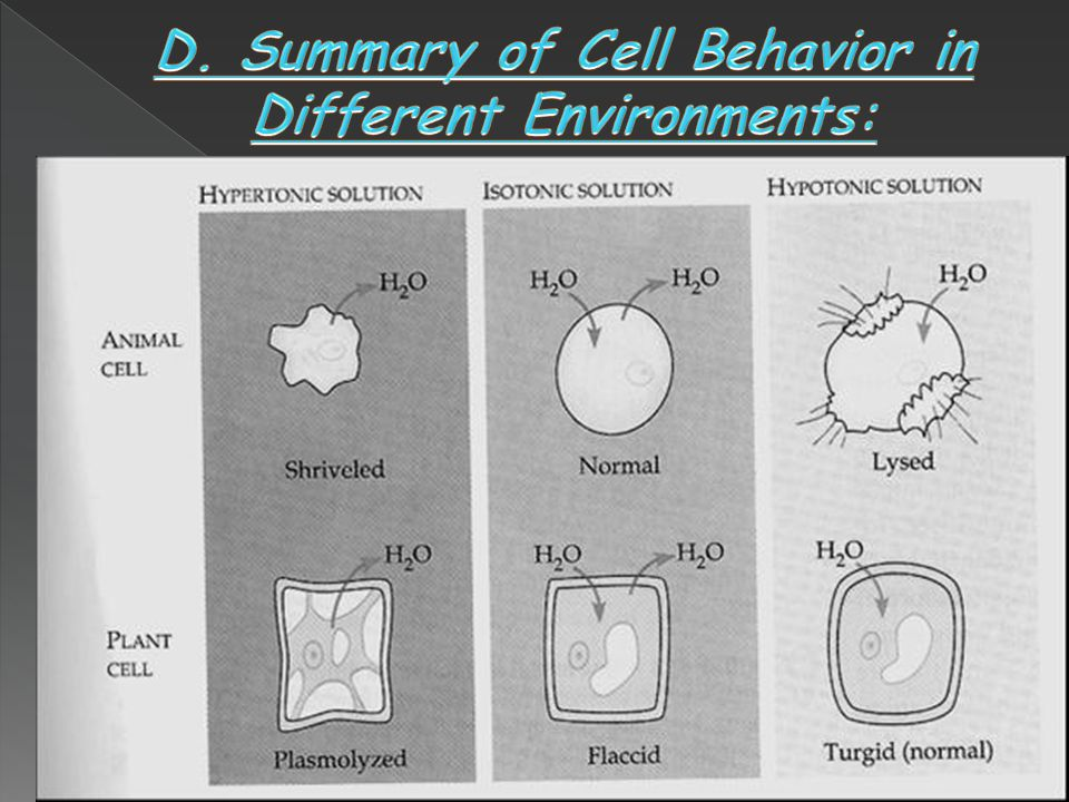 D. Summary of Cell Behavior in Different Environments: