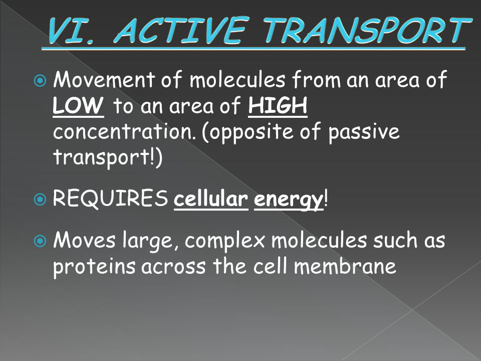 VI. ACTIVE TRANSPORT Movement of molecules from an area of LOW to an area of HIGH concentration. (opposite of passive transport!)
