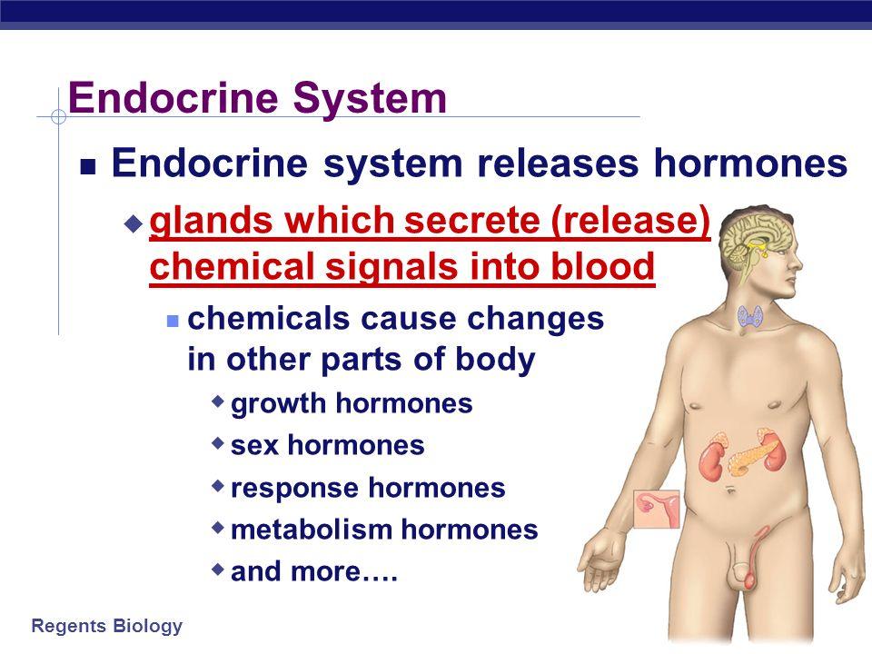 Endocrine System Endocrine system releases hormones