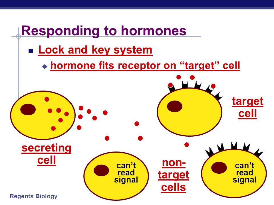Responding to hormones