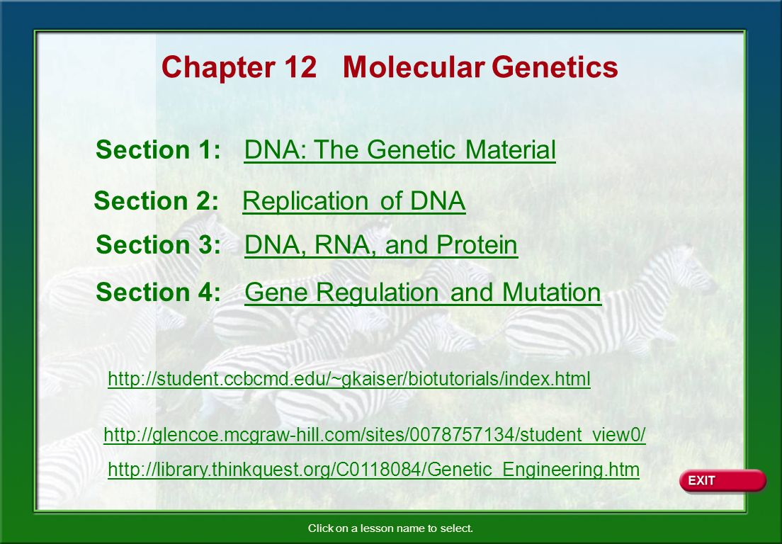 Chapter 12 Molecular Genetics
