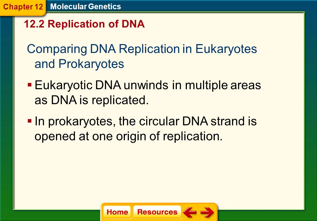 Comparing DNA Replication in Eukaryotes and Prokaryotes