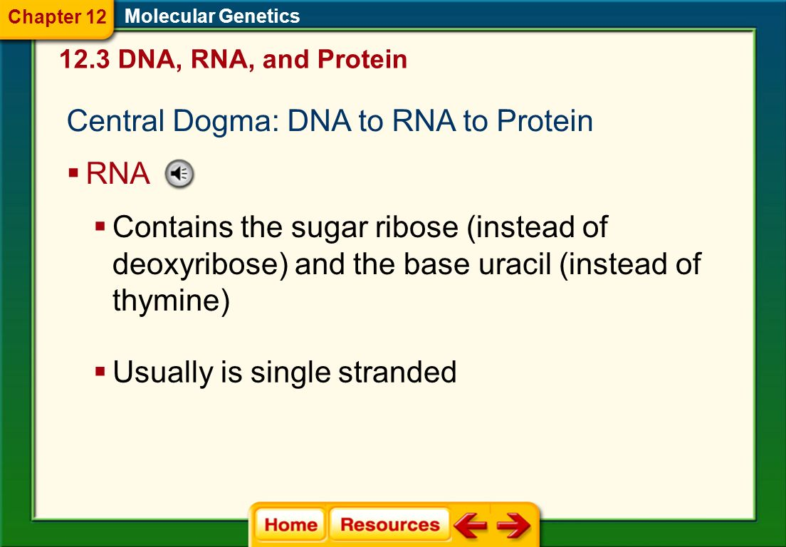 Central Dogma: DNA to RNA to Protein