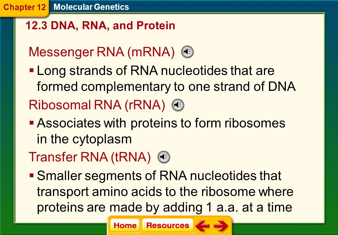 Associates with proteins to form ribosomes in the cytoplasm