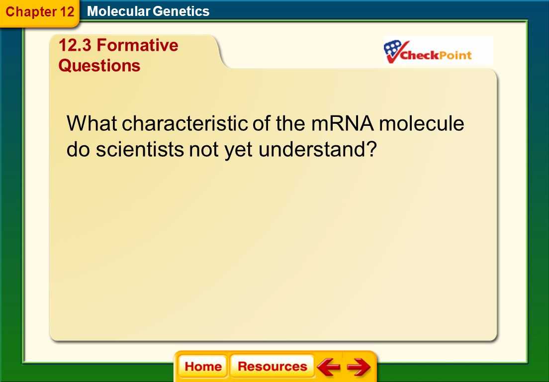 What characteristic of the mRNA molecule