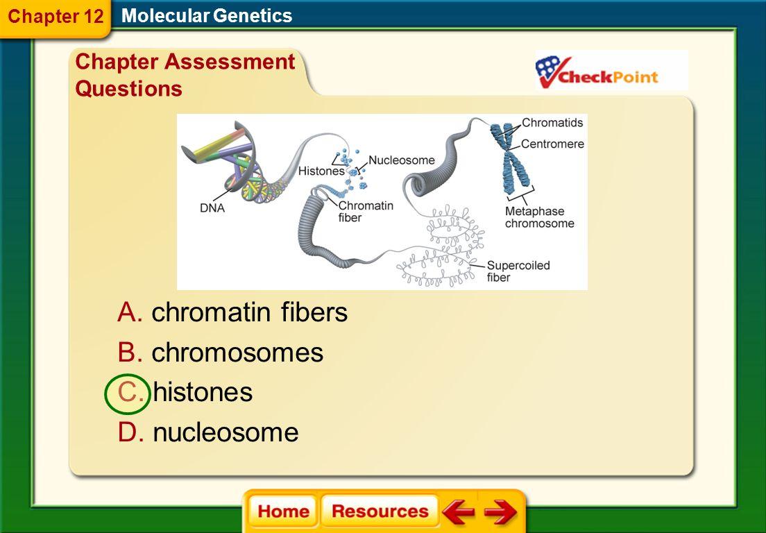 chromatin fibers chromosomes histones nucleosome
