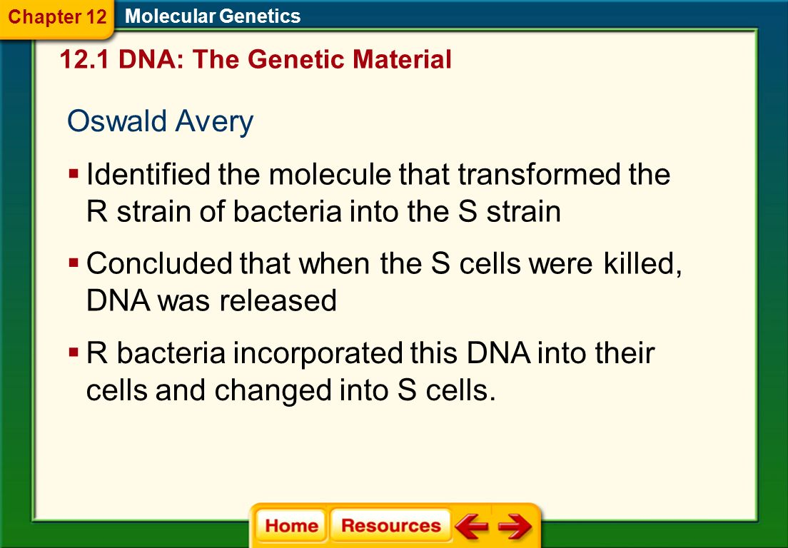 Concluded that when the S cells were killed, DNA was released