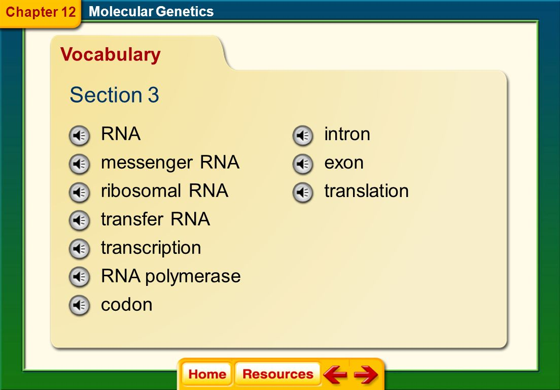 Section 3 Vocabulary RNA messenger RNA ribosomal RNA transfer RNA