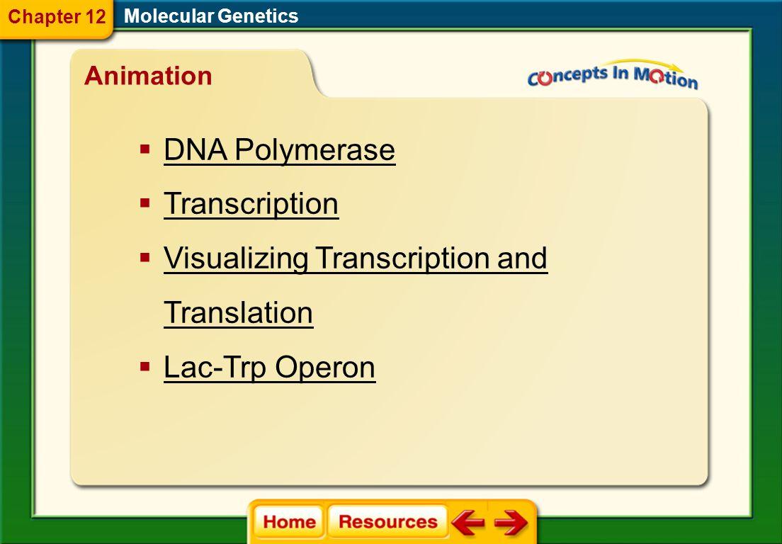 Visualizing Transcription and Translation