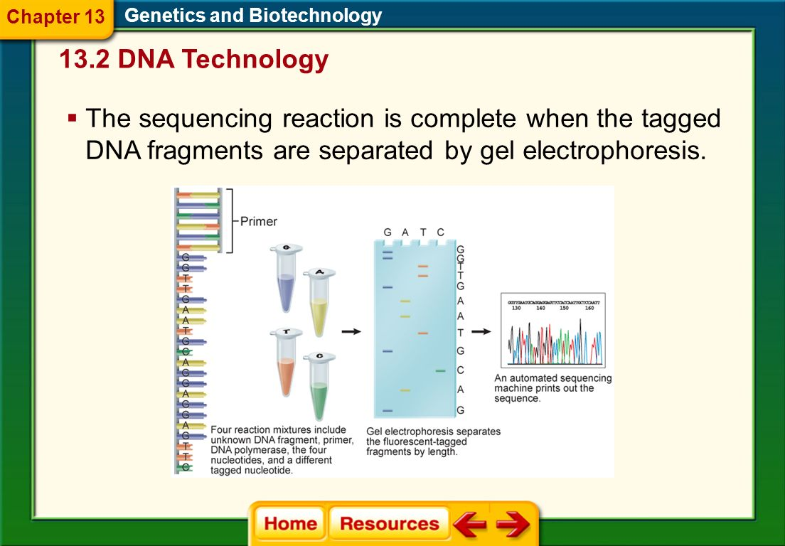 Chapter 13 Genetics and Biotechnology. 13.2 DNA Technology.