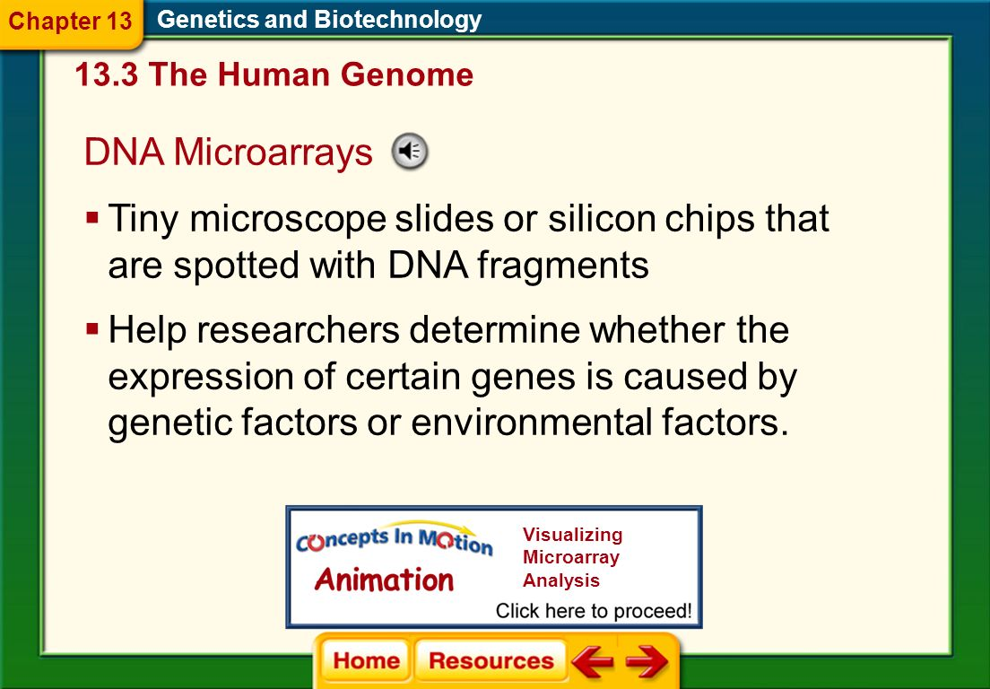 Chapter 13 Genetics and Biotechnology. 13.3 The Human Genome. DNA Microarrays.