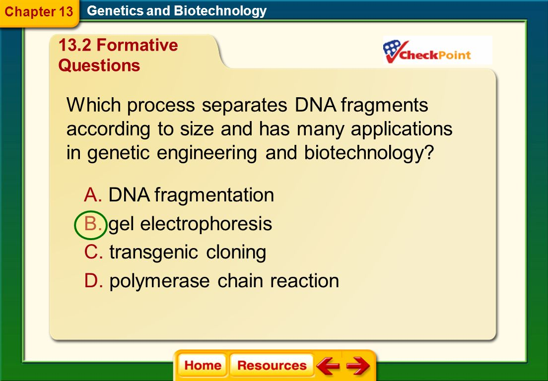 Which process separates DNA fragments