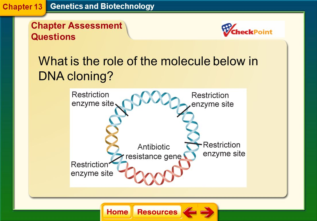 What is the role of the molecule below in DNA cloning