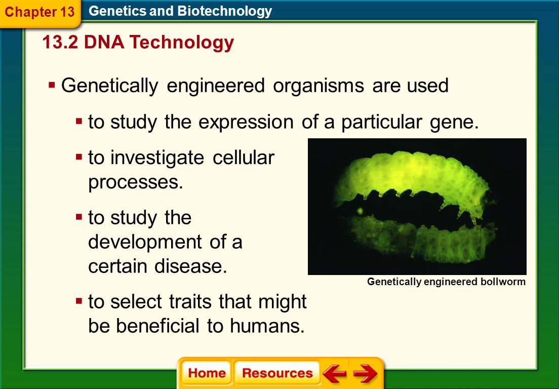 Genetically engineered organisms are used