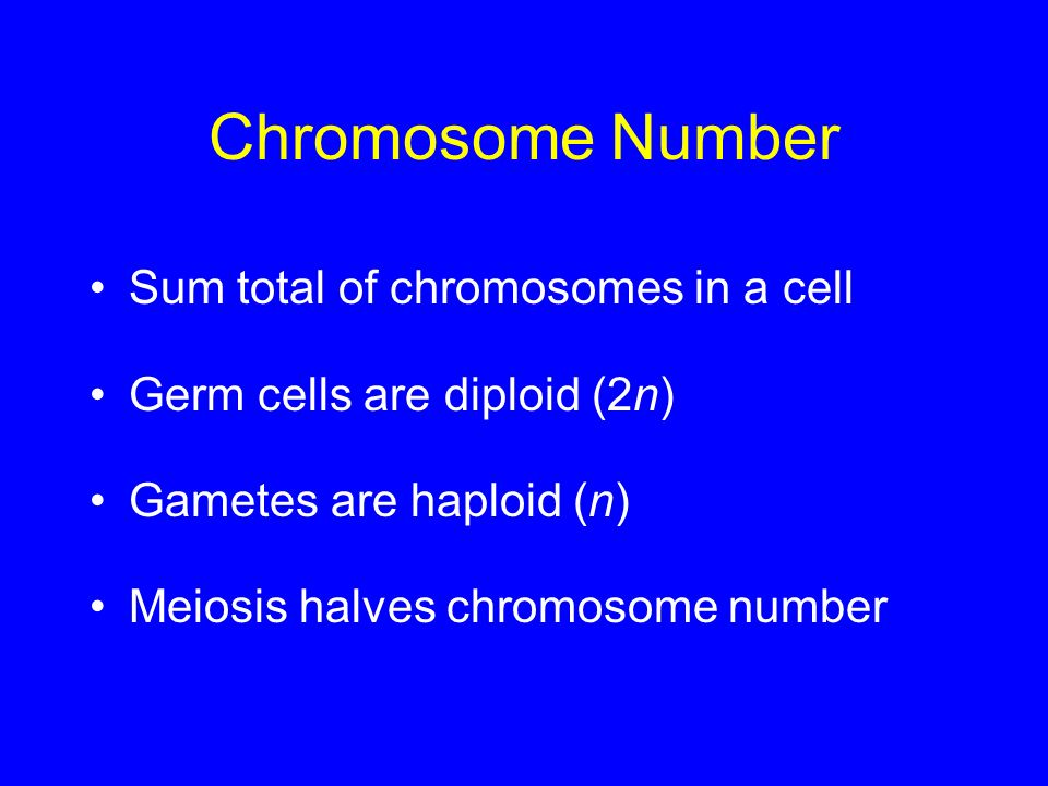 Chromosome Number Sum total of chromosomes in a cell