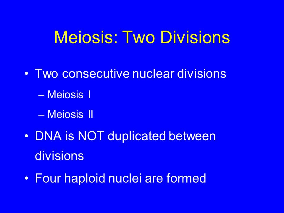 Meiosis: Two Divisions