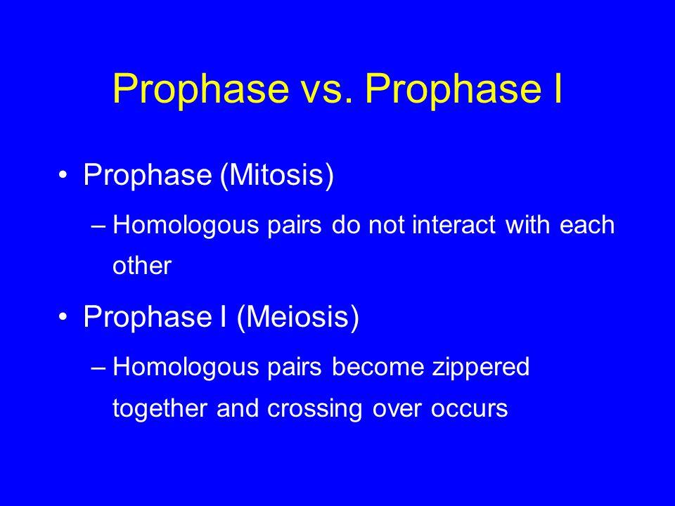 Prophase vs. Prophase I Prophase (Mitosis) Prophase I (Meiosis)