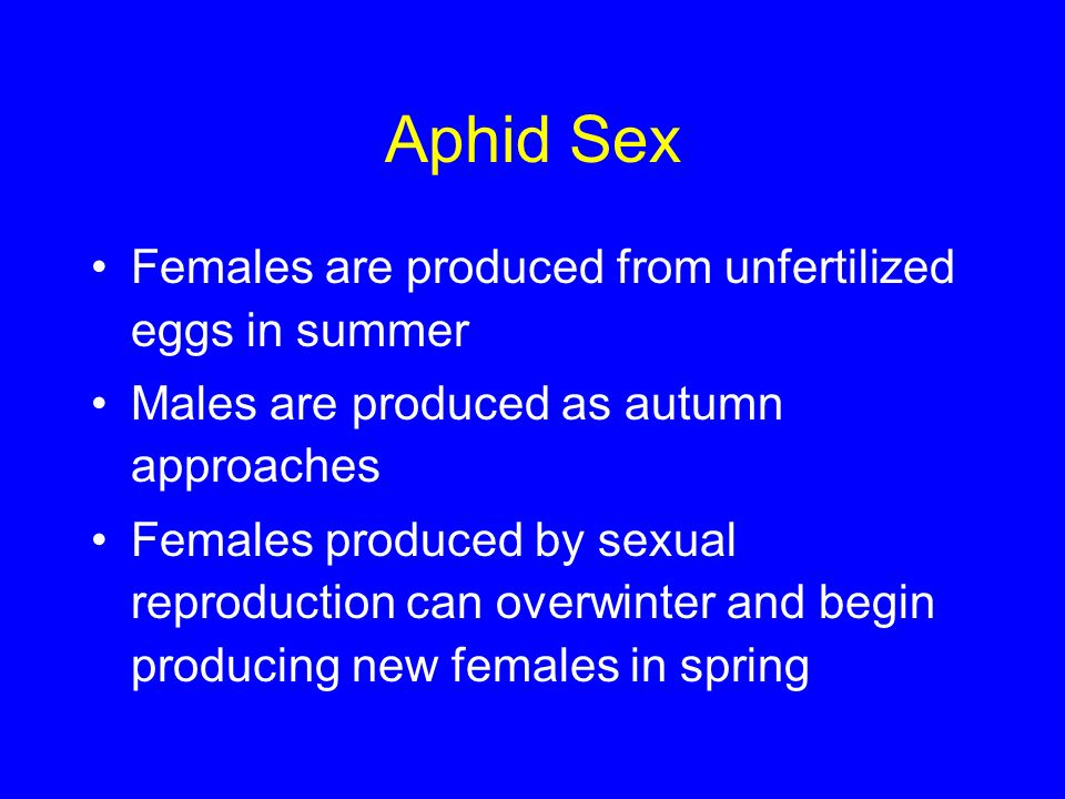 Aphid Sex Females are produced from unfertilized eggs in summer