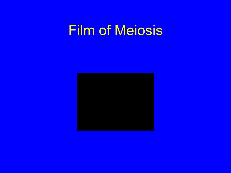 Film of Meiosis