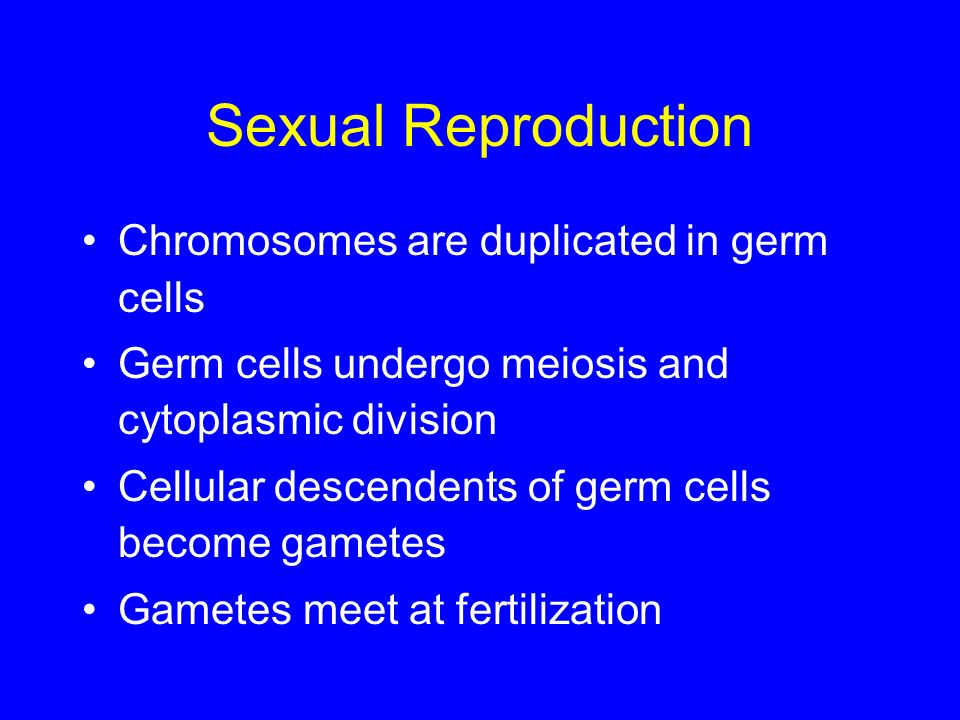 Sexual Reproduction Chromosomes are duplicated in germ cells