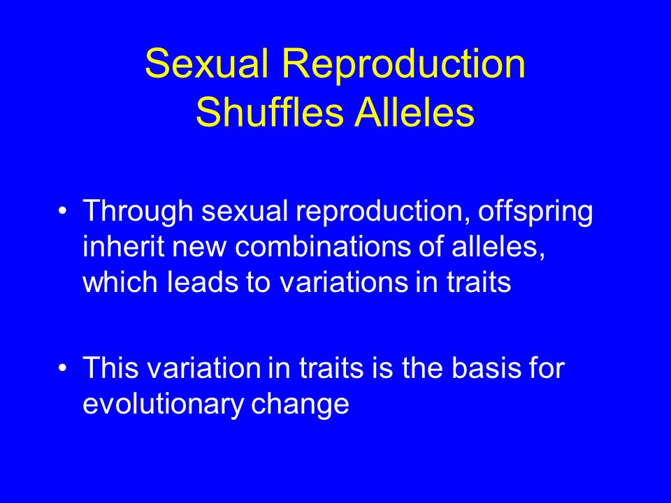 Sexual Reproduction Shuffles Alleles