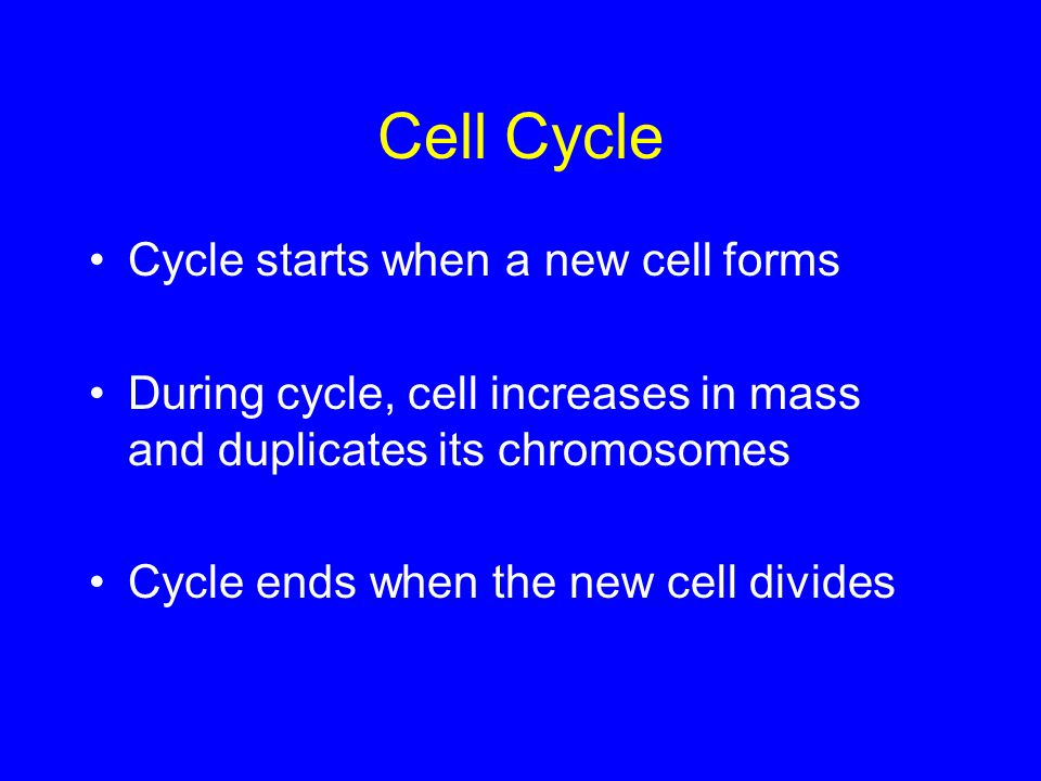 Cell Cycle Cycle starts when a new cell forms