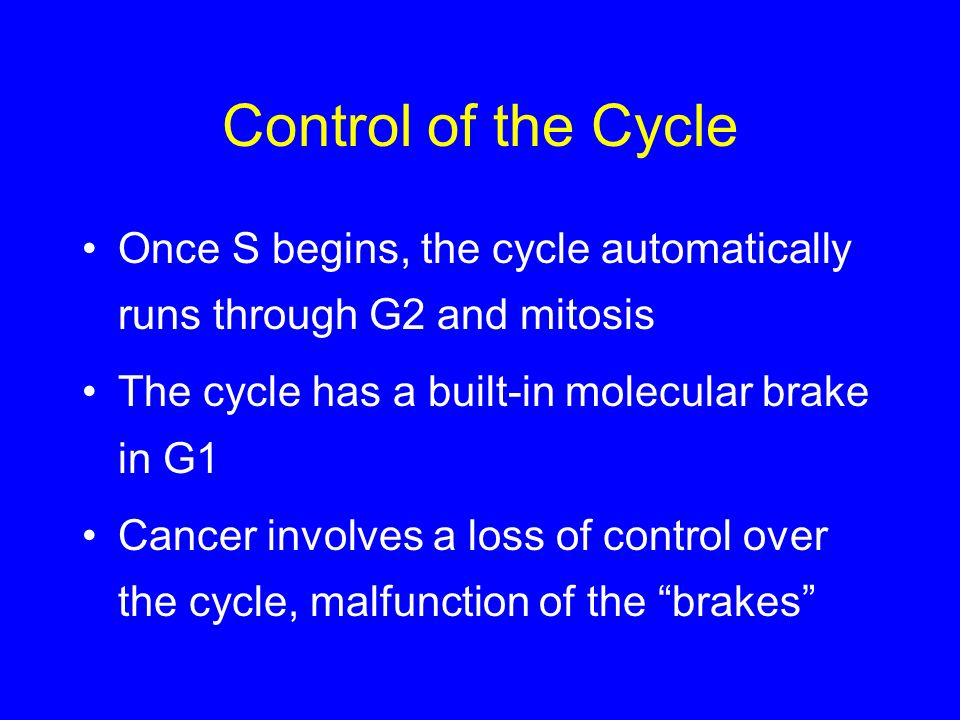 Control of the Cycle Once S begins, the cycle automatically runs through G2 and mitosis. The cycle has a built-in molecular brake in G1.