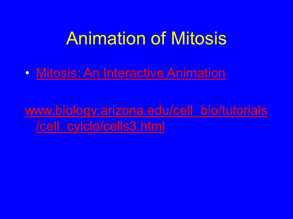 Animation of Mitosis Mitosis: An Interactive Animation