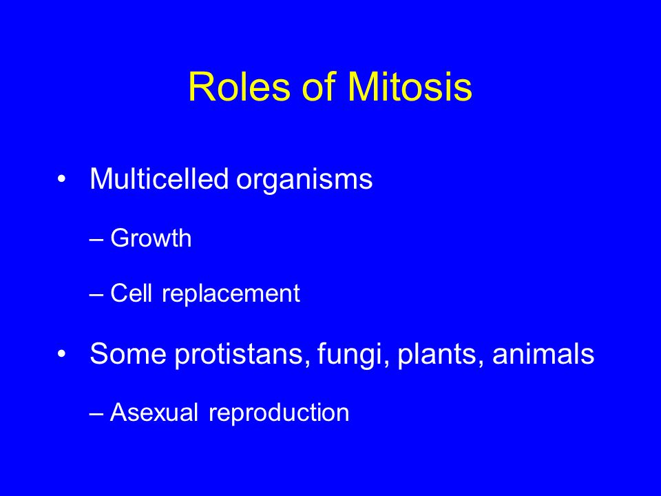 Roles of Mitosis Multicelled organisms