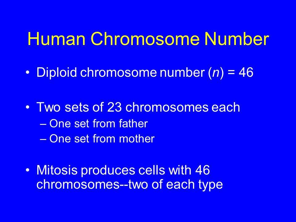 Human Chromosome Number