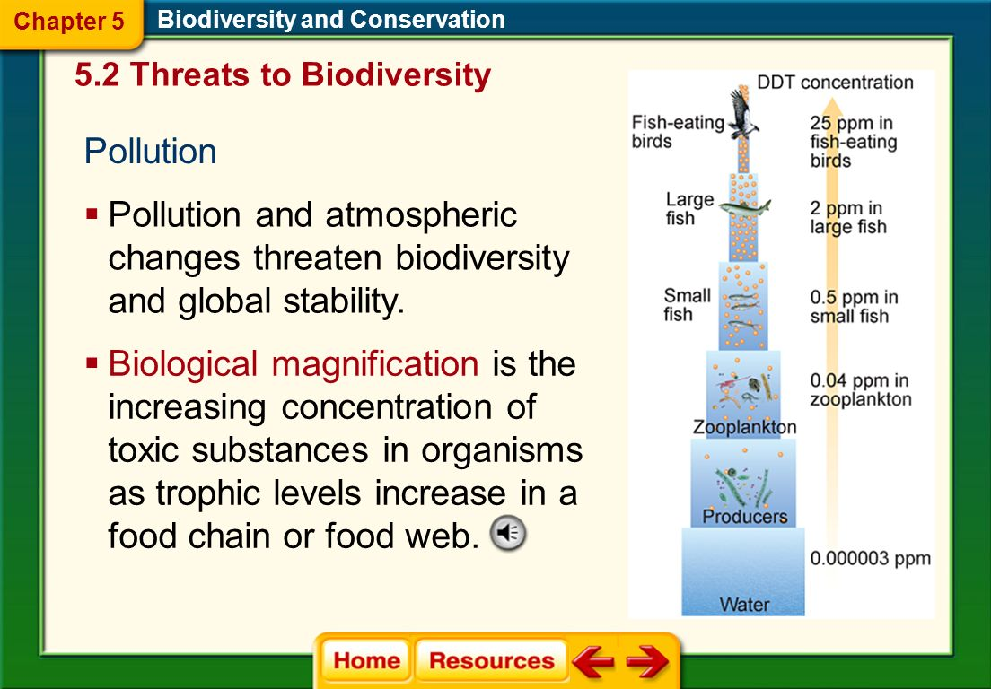 Chapter 5 Biodiversity and Conservation. 5.2 Threats to Biodiversity. Pollution.