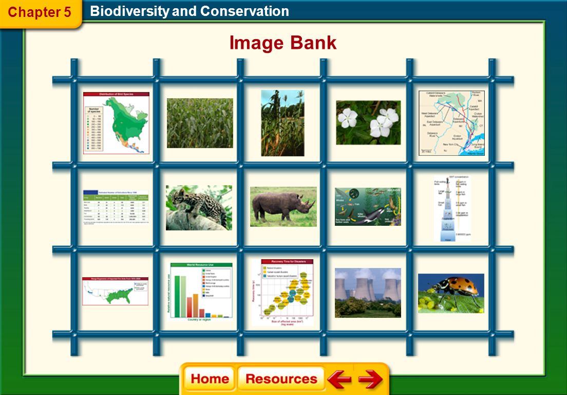Chapter 5 Biodiversity and Conservation Image Bank