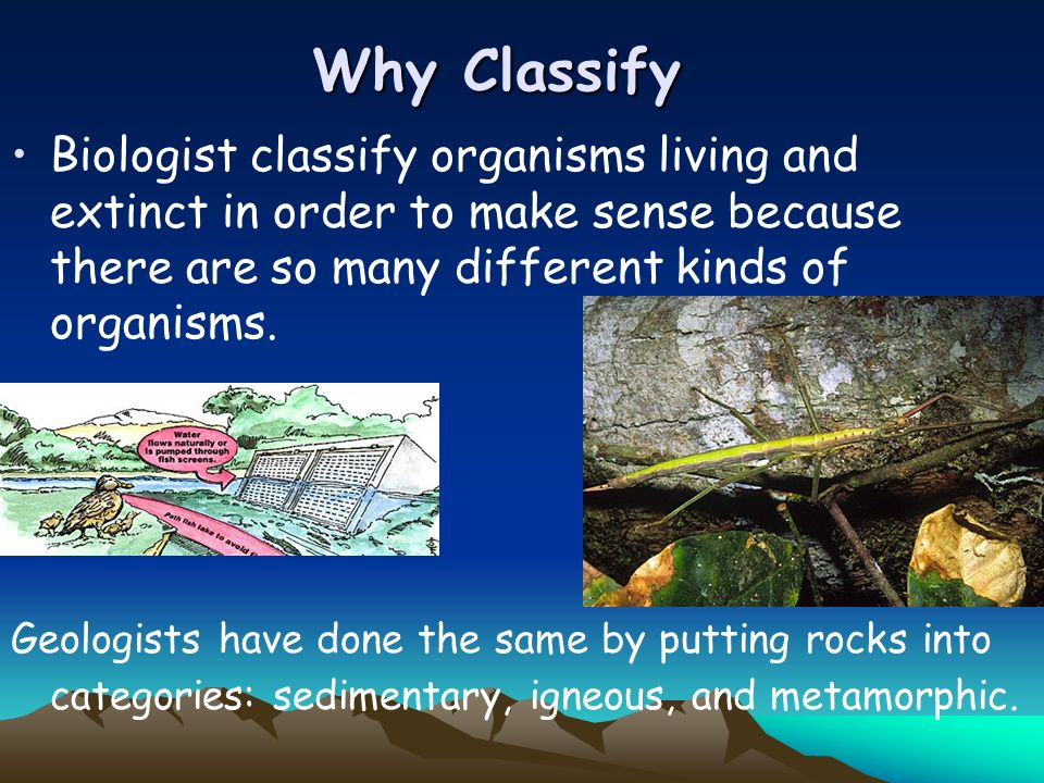 Why Classify Biologist classify organisms living and extinct in order to make sense because there are so many different kinds of organisms.