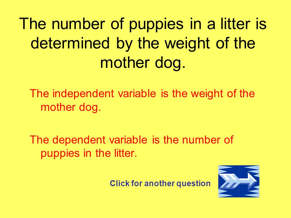 The number of puppies in a litter is determined by the weight of the mother dog.