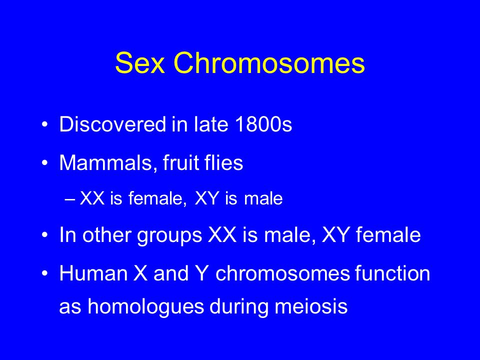 Sex Chromosomes Discovered in late 1800s Mammals, fruit flies