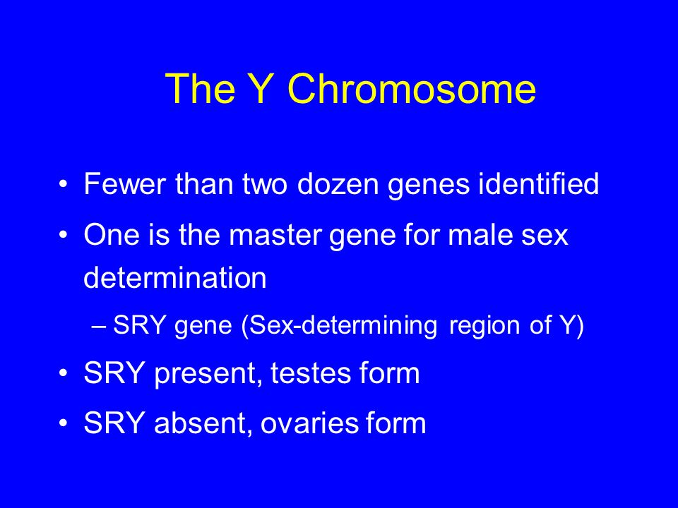 The Y Chromosome Fewer than two dozen genes identified