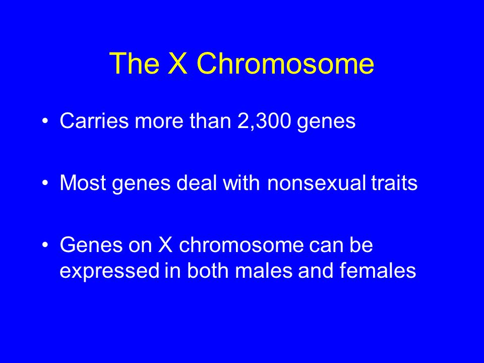 The X Chromosome Carries more than 2,300 genes