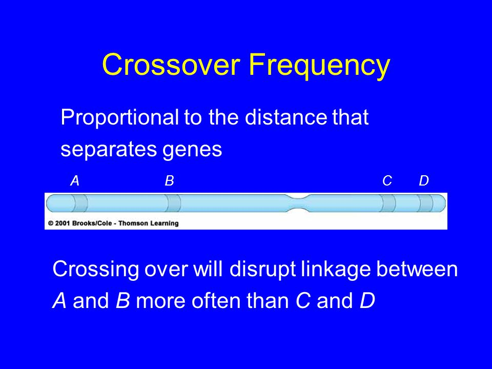 Crossover Frequency Proportional to the distance that separates genes